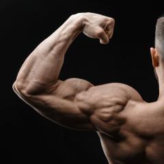 Job Opportunity | Male Bodybuilder