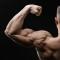 Job Opportunity   Male Bodybuilder